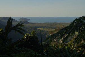 Daintree Rainforest – der älteste Regenwald der Welt