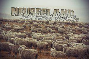 Neuseeland und seine Schafe