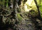 Wanderweg durch Jungle