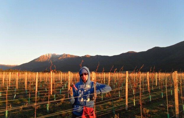 Vineyard work Belnheim