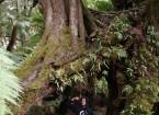 Dschungel bei Maits Rest