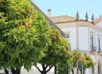 Orangenbäume in Faro