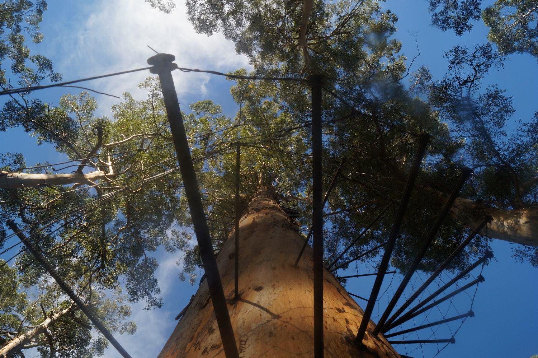Westküste Australien: Pemberton