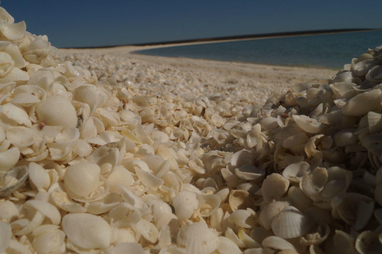 Westküste Australien: Shark Bay