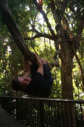 Barrel Falls bei Cairns