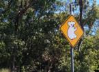 Achtung: Koalas