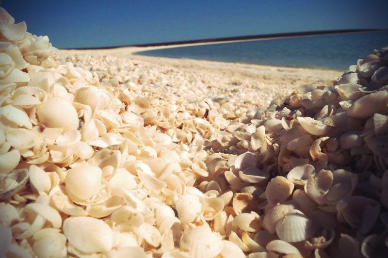 Muscheln, aus denen der Shell Beach in der Sharkbay in Australien besteht
