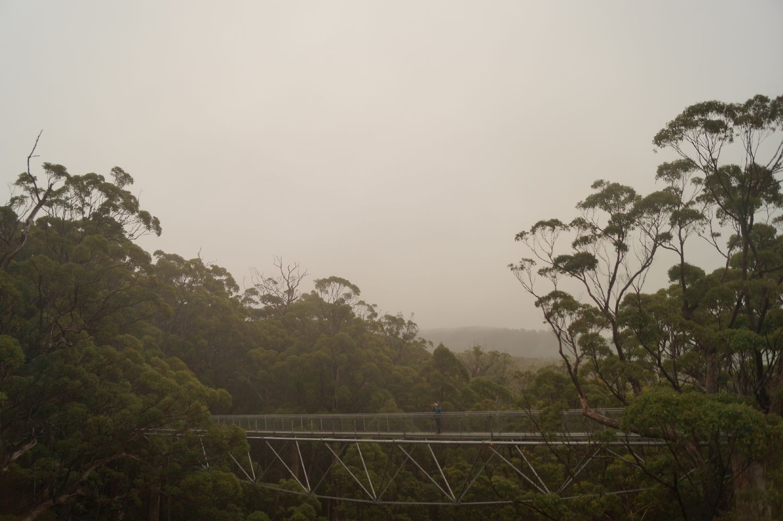 Westküste Australien: valley of giants Tree Top Walk