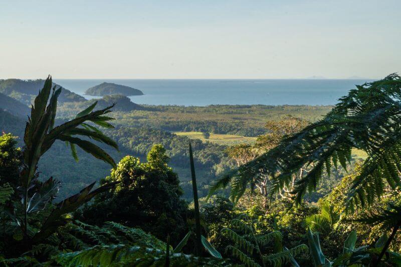 Ostküste Australien Daintree Regenwald