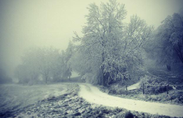 winter melanchonia
