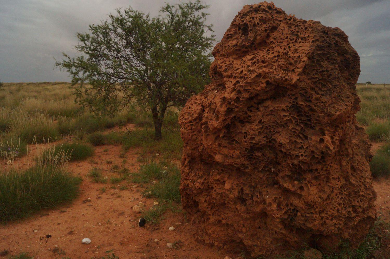 Termitenhügel Westküste Australien