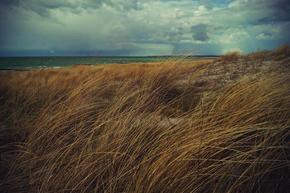 Ahrenshoop-waving-dune-grazers