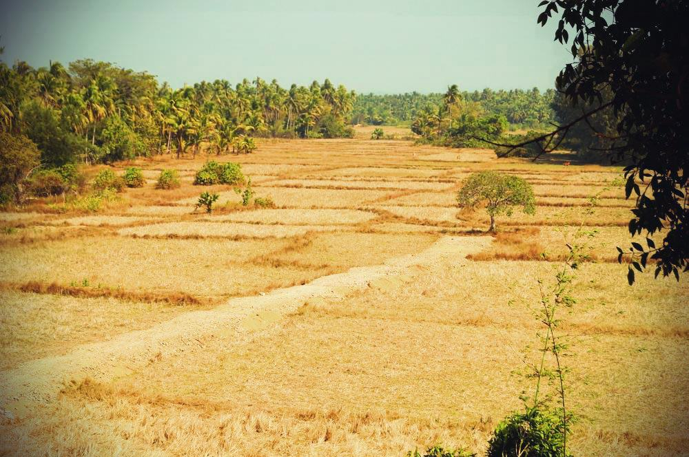 Landschaft bei Thazin