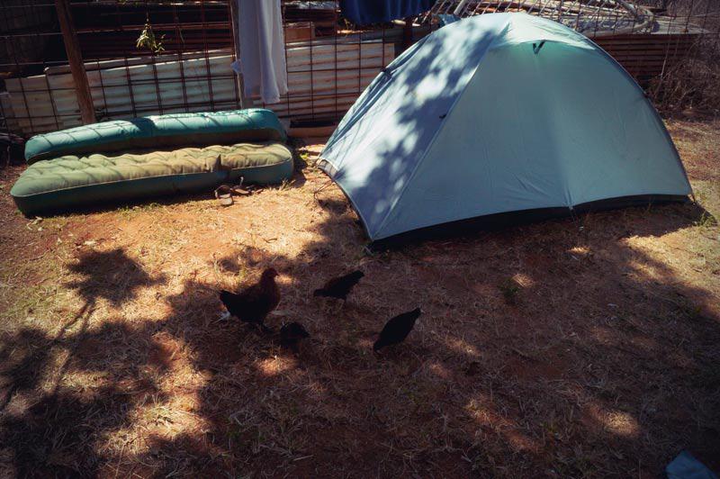 Zelten im Coco's Hostel in Katherine