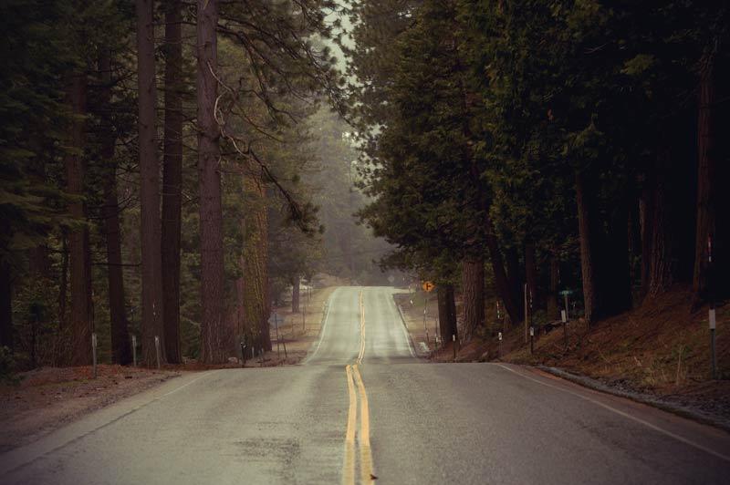 Highway durch Wald in Kalifornien.