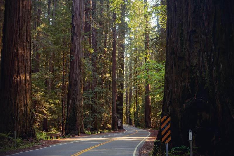 Kalifornien Roadtrip Avenue of Giants