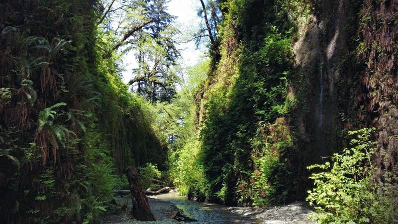 Kalifornien Roadtrip Fern Canyon