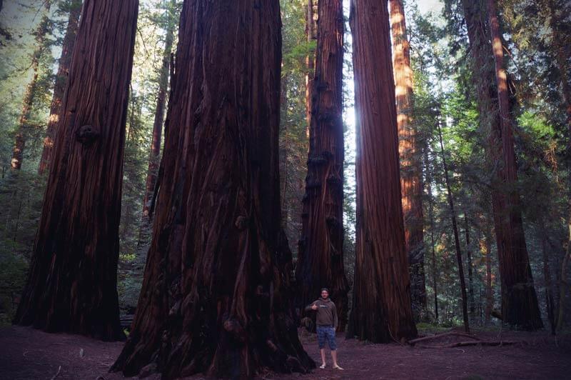 Kalifornien Roadtrip Redwood Bäume