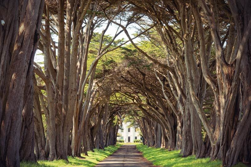 Roadtrip Kalifornien Treetunnel im Point REyes NationalPark