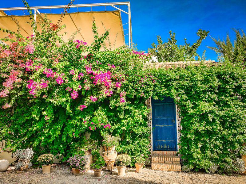 Viana Palace: Tüe mit Blumen.