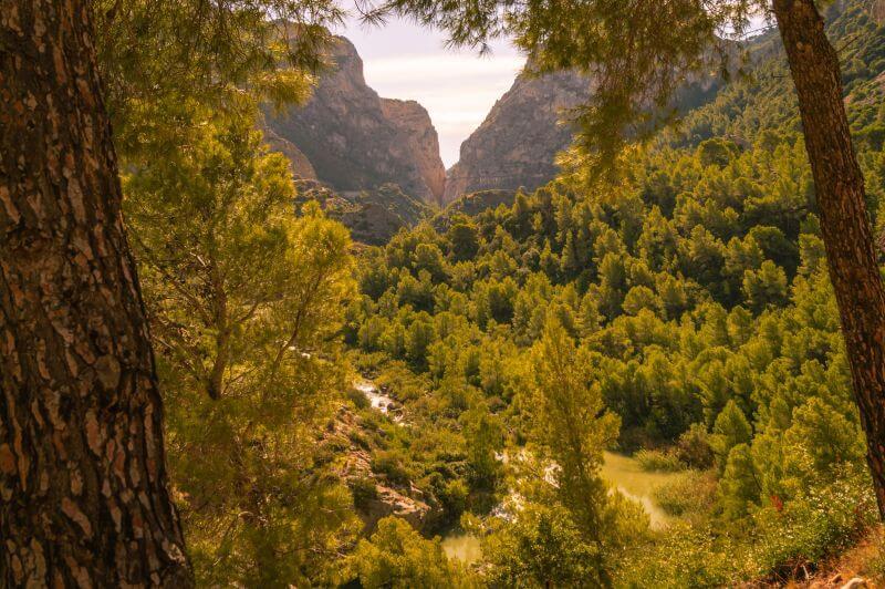 Wald-Landschaft am Caminito del Rey
