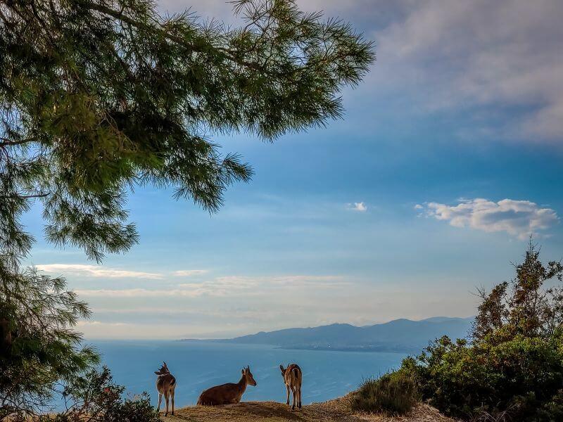 Rehe blicken über die Küstenlandschaft des Naturparkes Cerro Gordo