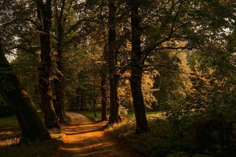 Wanderweg auf dem Mönchsberg