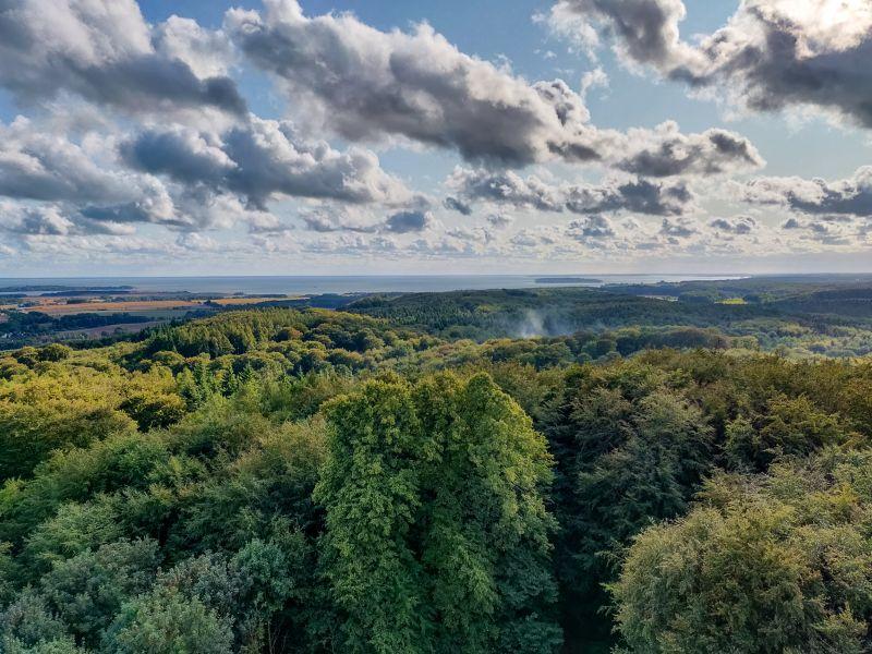 Damp durch den Wald des rasenden Rolands auf Rügen