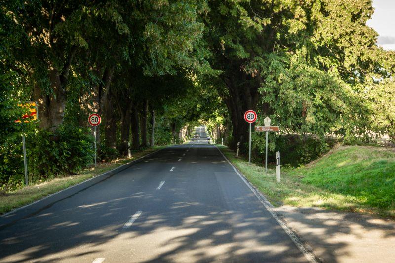 Allee auf der Deutschen Alleenstraße auf Rügen