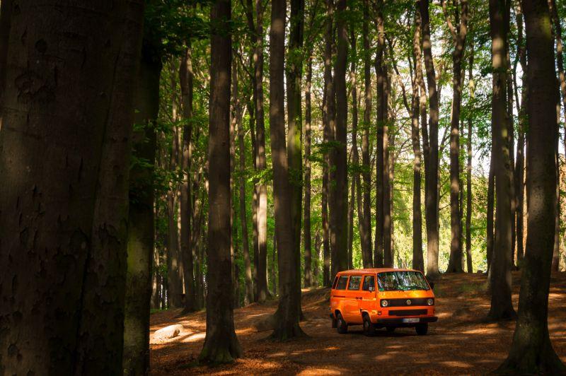 T3 Van im Wald auf Rügen