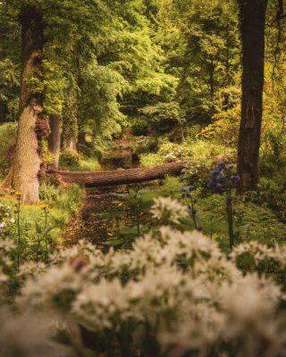 Park vom Schloss Dyck