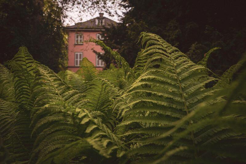 Museum Insel Hombroich Farne vorm rosa Haus