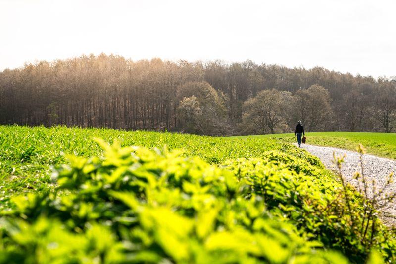Wanderer in den Düsselauen