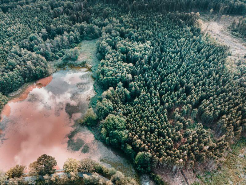 Wald an den Plothener Teichen von oben