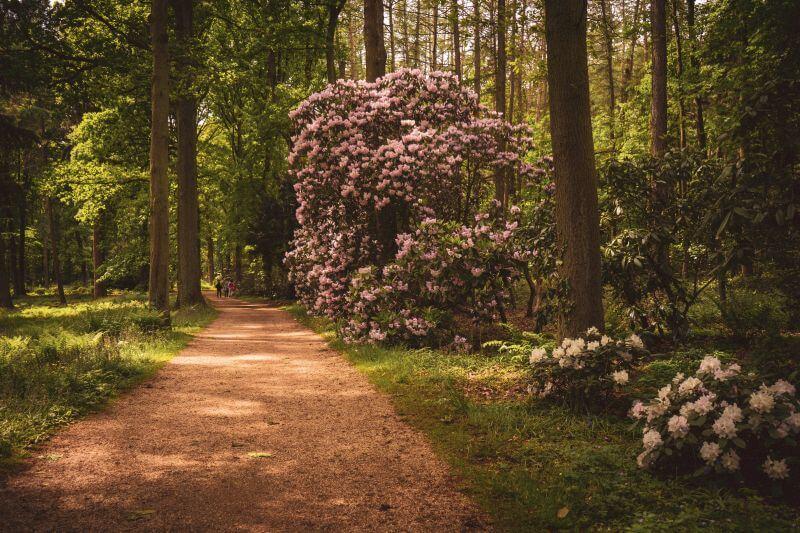 Weg durch Schlosspark von Schloss Dyck
