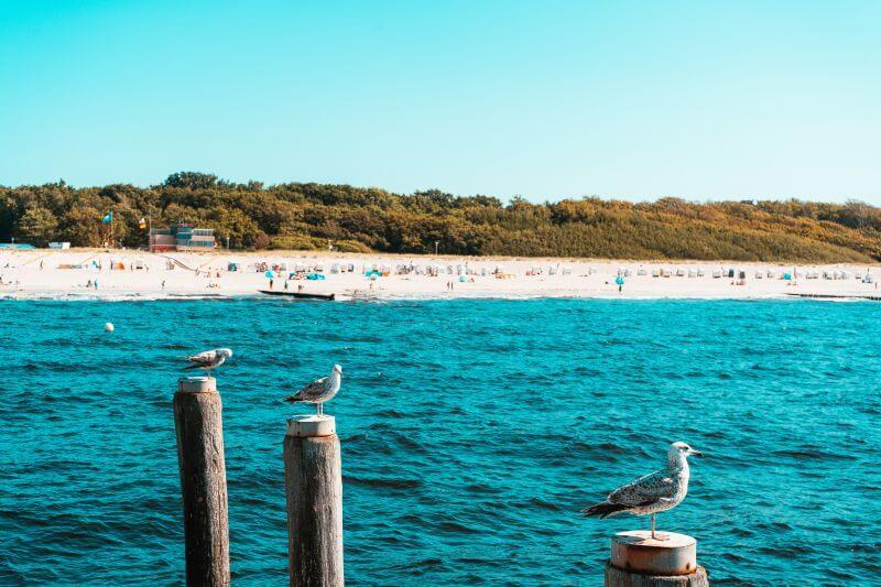 Drei Moewen auf Holzstegen am Strand von Graal Müritz