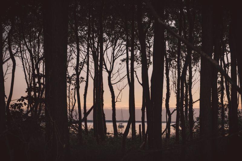 Insel Poel Blick durch Küstenwald auf ein ankerndes Boot