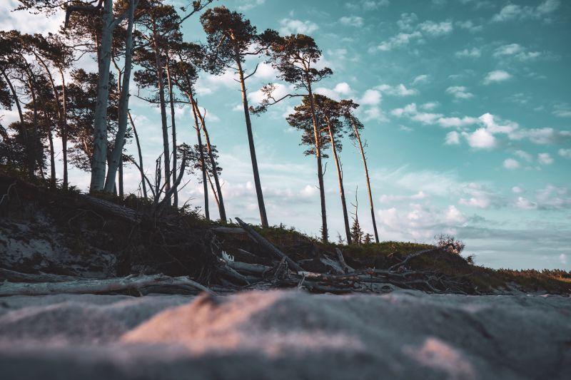 Weststrand Darß Ostsee Bäume