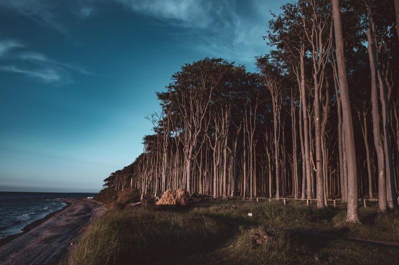 Gespensterwald zu später Stunde