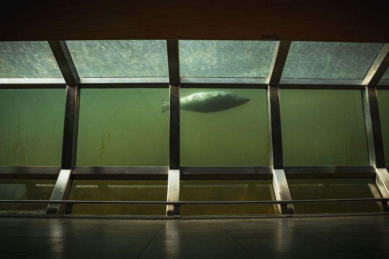 Seehunde-Kolonie Unterwasser Aussichtsfenster