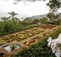 Blumenfeld im Jardim Botanico da Madeira