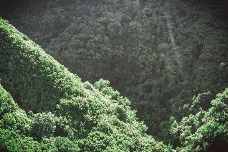 Laurissilva Wald Madeira