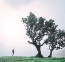 Wanderer steht vor einem Loorbeerbaum im Feenwald Fanal auf Madeira