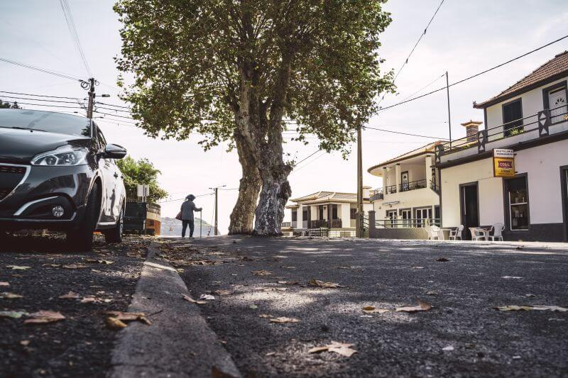 Baum Mitten auf der Straße in Madeira