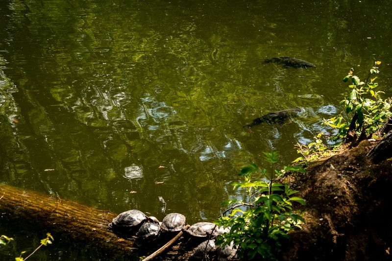 Schildkröten am Schloss Rheydt