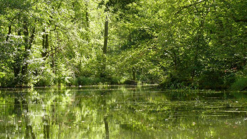 Spreewald Fluss im Wald