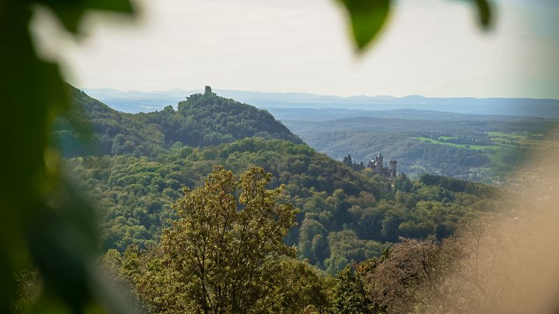 Wochenendtrips Deutschland: Ausblick auf die Wälder des Siebengebirges
