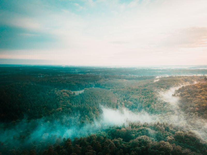 Wochenendtrips Deutschland: Wald mit Nebel überdeckt in Schorfheide Chorin