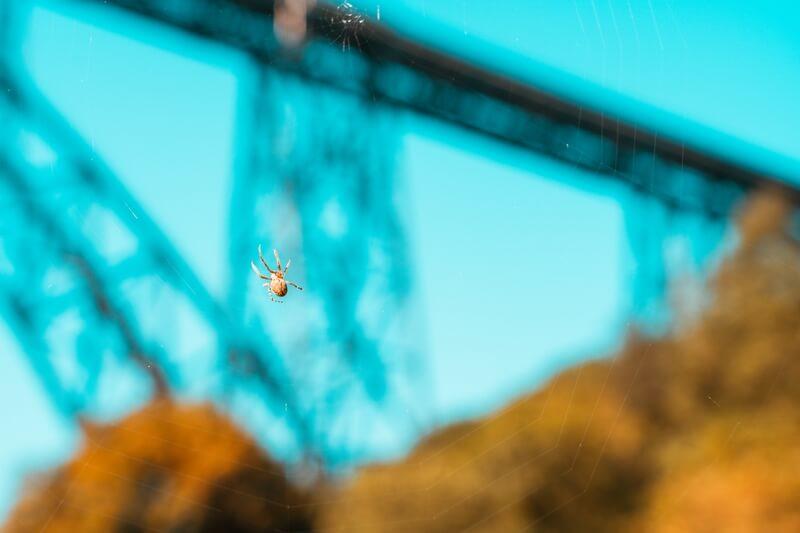 Spinne vor Müngstener Brücke