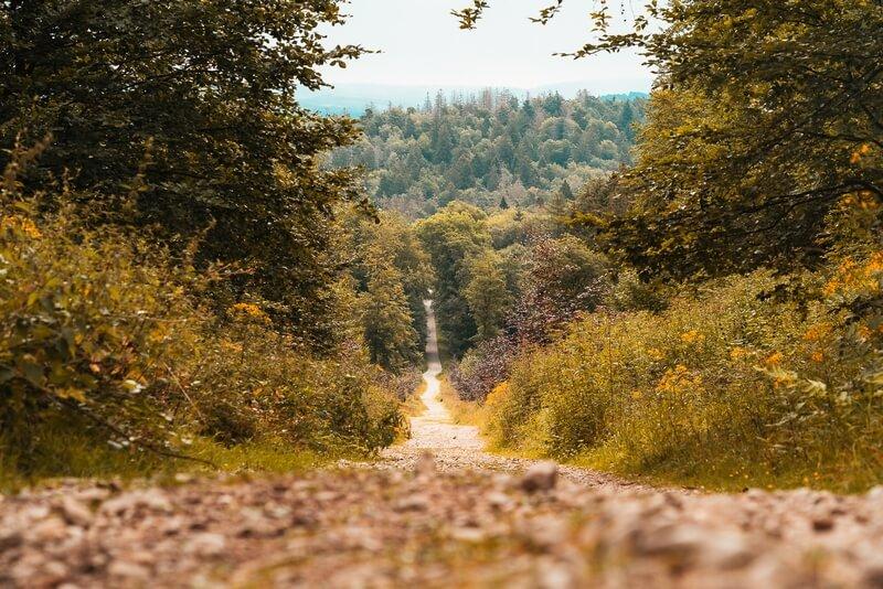 Waldweg im Teutoburger Wald in der Nähe der Externsteine